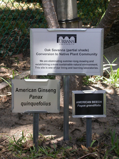 tree plaques  plant id markers  u0026 memorial tree tags