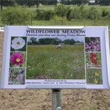 Plant Interpretive Informational Marker
