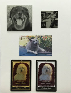 Pet Memorial Plaques & Tags - Personalized Pet Memorials | Aluma Photo